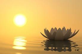Flor de loto + sol